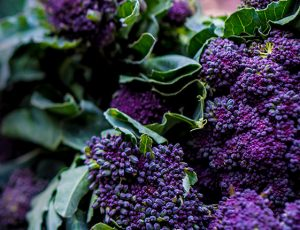 Purple Sprouting Broccoli - Wide Shot