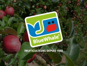 Blue Whale dish competition banner
